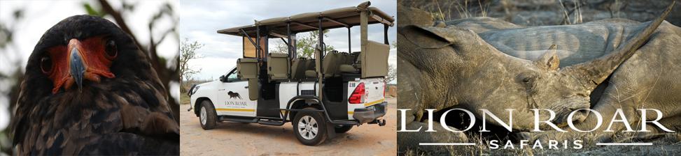 African Budget Safari - BOOK YOUR SAFARI NOW! - Lion Roar