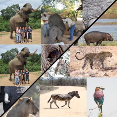 Full Day Safari + Elephant Interaction