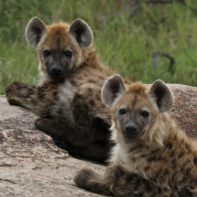 one night in Kruger National Park and go on a night safari,