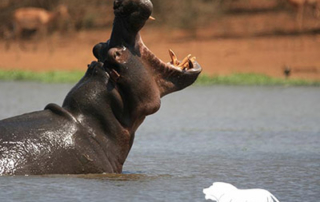 Affordable Kruger safari packages, Affordable Kruger National Park safaris, Affordable safaris, Affordable Kruger safaris, Affordable Kruger Park safaris, Affordable Kruger, Affordable Kruger safaris, African Budget Safari, cheap Kruger safaris, chap safari in Kruger, book an affordable Kruger National Park safari, Affordable Kruger National Park safari