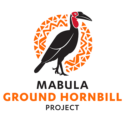 Mabula Southern Ground-Hornbill Project | We support | Lion Roar Safaris